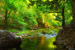 Green Forest And Water Stream With Mossy Stones Royalty Free Stock Photography