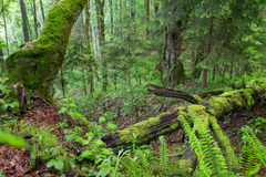 Green forest Stock Image