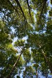 Green forest in the beginning of autumn. View on trees from below. Foliage against the sky.  stock photos