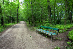 Green forest with a bench on the road Royalty Free Stock Image