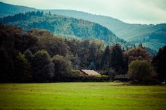 Green Forest in Beskids Mountains Stock Photos