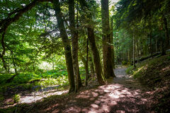 Green forest of Biogradsa gora national park Royalty Free Stock Images