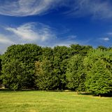 Green forest with blue sky Stock Images