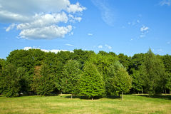 Green forest with blue sky and clouds Royalty Free Stock Photo