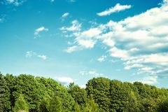 Green forest with blue sky and clouds Royalty Free Stock Image