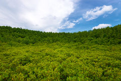 Green forest with blue sky Stock Image