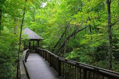 Green Forest Boardwalk Royalty Free Stock Image