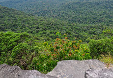 Green forest at Bokor National Park in Kampot, Cambodia Stock Photos