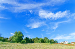 Green forest with bright blue sky Royalty Free Stock Photo