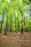 Green forest during bright day Royalty Free Stock Photography