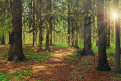 Green forest on bright sunny day shines rays of sun Stock Photo
