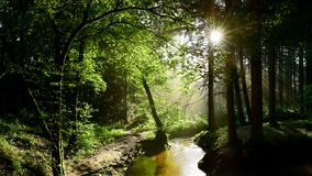 Green forest with brook and sun stock image