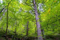 Green forest canopy Stock Image