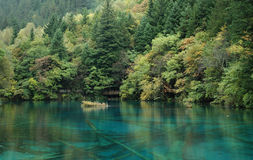 Green forest with a clean blue lake Royalty Free Stock Photos