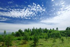 Green Forest and Clouds Stock Photography