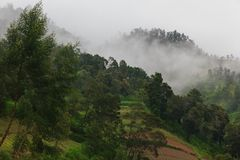 Green forest and clouds fog in the mountains royalty free stock image