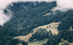 Green forest and clouds. Mountines Royalty Free Stock Photos