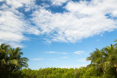 Green forest and cloudy blue sky Royalty Free Stock Images