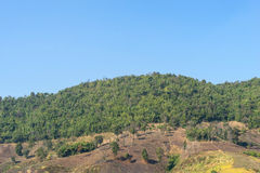Green forest contrast with deforest in same mountain. In Northern of Thailand Stock Photo