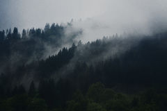 Green Forest Cover by Fog during Daytime Royalty Free Stock Photos