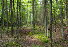 Green forest ecosystem Royalty Free Stock Photo