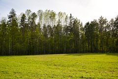 Green forest at the edge of the field royalty free stock photography