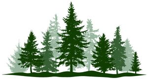 Green forest evergreen pine, tree isolated. Park Christmas tree. Individual, separate objects.