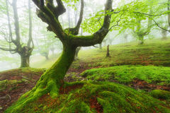 Green forest, fairy tale Royalty Free Stock Photo