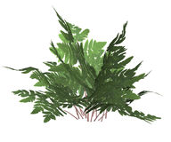 Green Forest Fern Stock Images