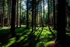 Green forest floor Stock Images