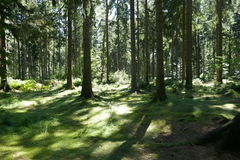 Green forest floor Royalty Free Stock Photo