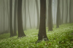Green forest with flowers on the ground Royalty Free Stock Photography
