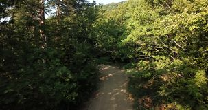 Forest trees passing tracking shot sunset fly by drone aerial close up nature. Green forest fly through, South Russia stock footage