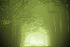 Green forest in the fog Stock Photos