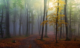 Green forest with fog during autumn Stock Image
