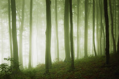 A green forest with fog at evening. A green forest with fog and light at evening Stock Photo