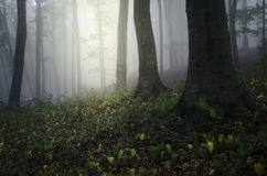 Green forest with fog Stock Images
