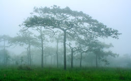 Green forest with fog Stock Photos
