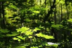 Green Forest Foliage In Sunlight And Shade Stock Photo