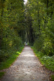 Green Forest Footpath Royalty Free Stock Images