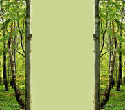 Green forest frame Stock Photography