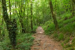 Green forest in France Stock Photo
