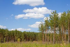 Green forest fringe Royalty Free Stock Photography