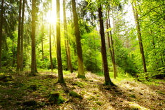 Green Forest. Stock Images