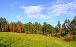 Green forest. Siberia, Russia royalty free stock photos