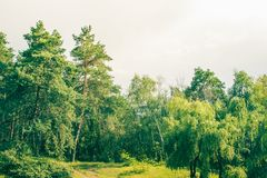 Green forest. In summer sunny day royalty free stock images