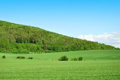 Green forest hill with green field and blue sky Royalty Free Stock Image