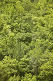 Green forest in the hill. No pollution Stock Images