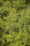 Green forest in the hill. No pollution Stock Photography