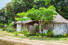 Green forest and huts in a misty morning Royalty Free Stock Images